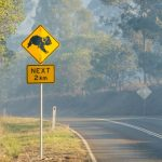 Victorian Government Bushfire Appeal