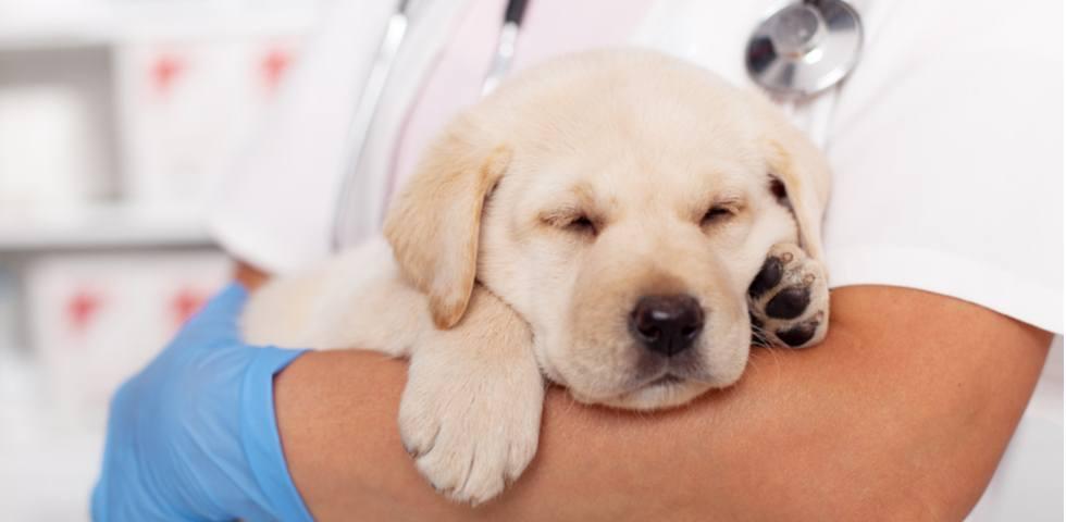 $7,500 donation nurtures future Guide Dogs